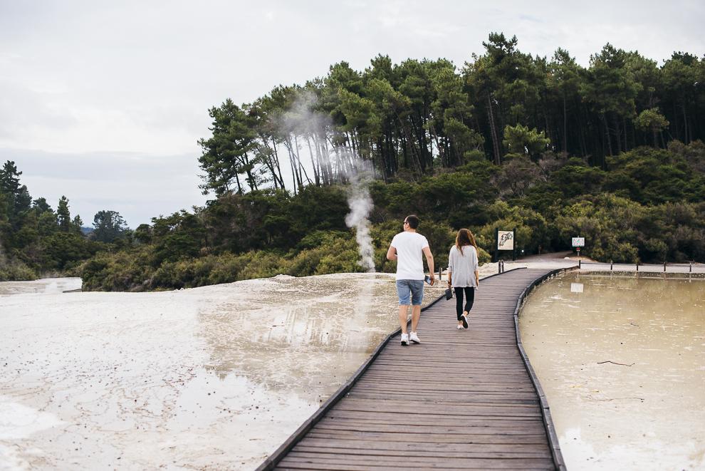 NZ-8560